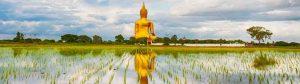 Ang Thong
