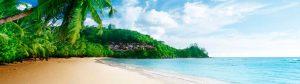 Belleza en miniatura, Coral Beach